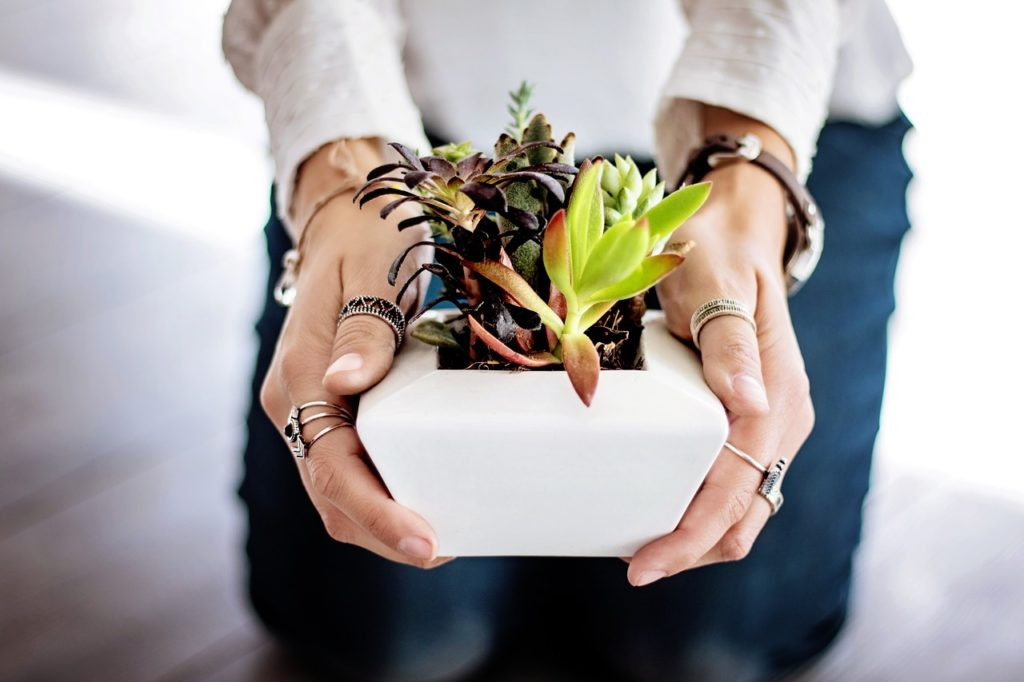 woman holding a plant