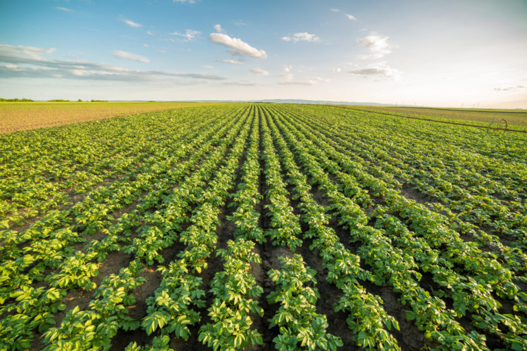 crops on a plot of land